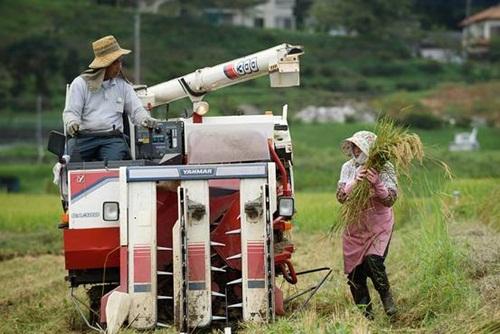Nông dân Nhật trước trận chiến giảm thuế sống còn