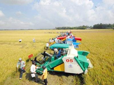 Tái cơ cấu toàn ngành nông nghiệp: Khi khoa học công nghệ thay thế chân tay