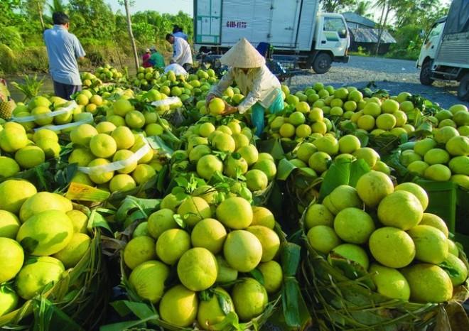 """DN Nhật """"bắt bệnh"""" ngành nông nghiệp Việt Nam"""