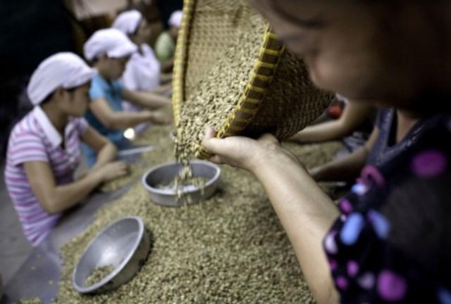 8 tháng, dự trữ cà phê trong nước tăng 3 lần