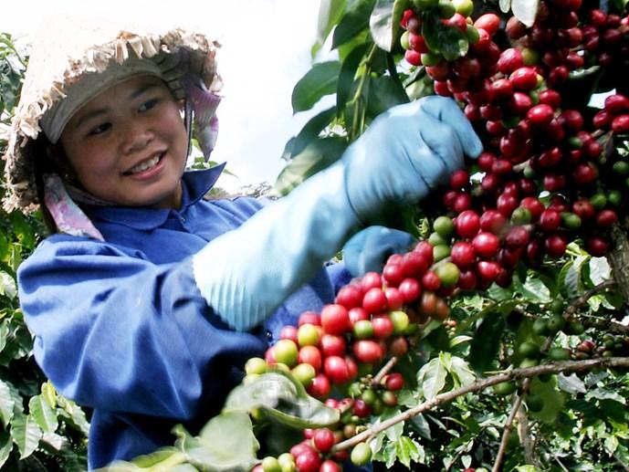 4.000 tỉ đồng tăng chất cà phê Lâm Đồng