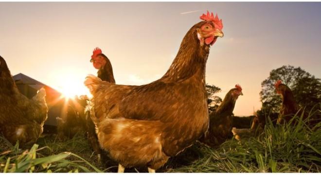 Nỗi lo của ngành chăn nuôi trước ngưỡng cửa hội nhập