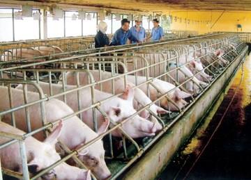 """Chăn nuôi: Thị trường nội vẫn hấp dẫn """"đại gia"""" FDI"""