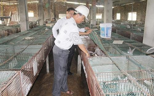 Kiếm tiền tỷ nhờ nuôi thỏ xuất sang Nhật