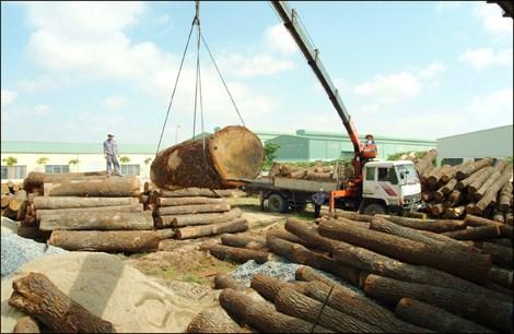 Kim ngạch xuất khẩu gỗ sang Trung Quốc đạt thặng dư 600 triệu USD/năm