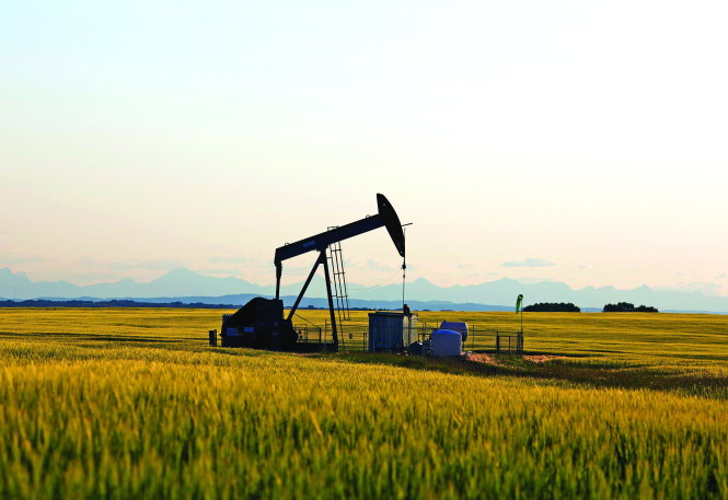 Giá dầu nhảy múa
