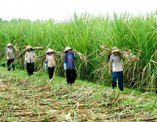 """""""Đại gia"""" Việt mang tiền ra nước ngoài làm nông"""