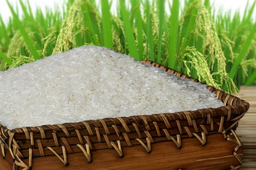 Gạo Việt khó 'được mùa' khi gia nhập TPP