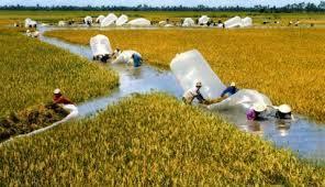 """Gạo Việt thua Campuchia: Hậu quả của """"mạnh ai người nấy làm"""""""