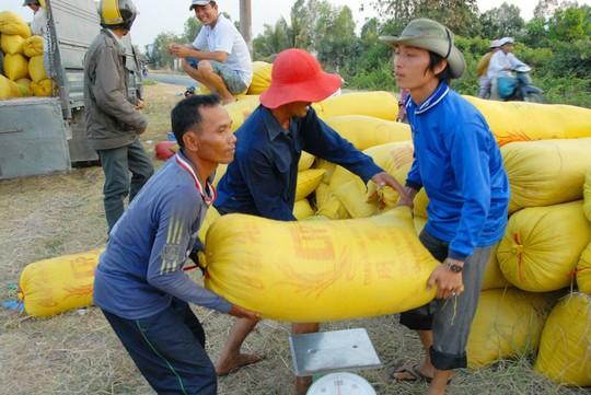 Gỡ thế bí cho gạo Việt