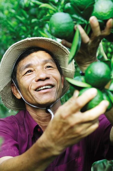 Những tỉ phú nông dân: Đột phá với cam sành