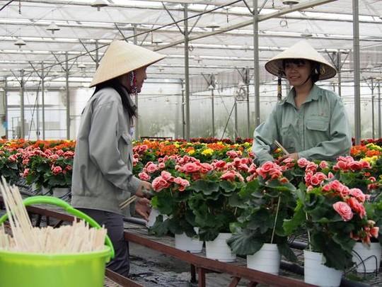 Việt Nam sẽ trở thành Hà Lan của ngành trồng hoa Châu Á?