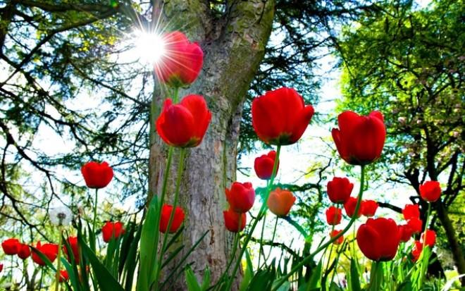 Từ bông hoa Tulip đến cơ hội thị trường chứng khoán phái sinh Việt Nam