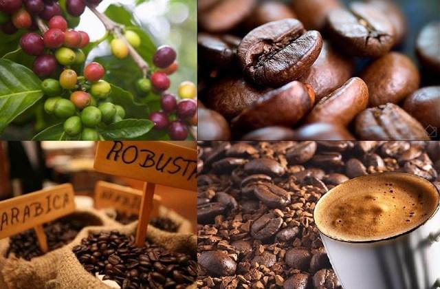 ICO cảnh báo cú sốc giá cà phê