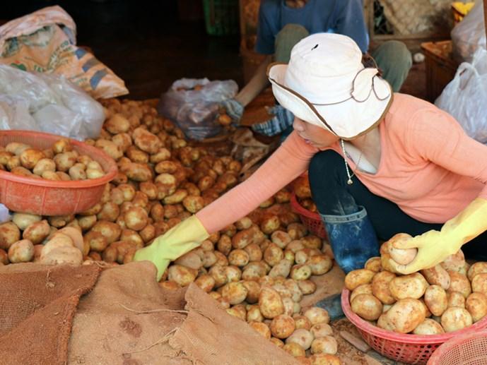 Rau củ Việt bị giả danh tràn lan