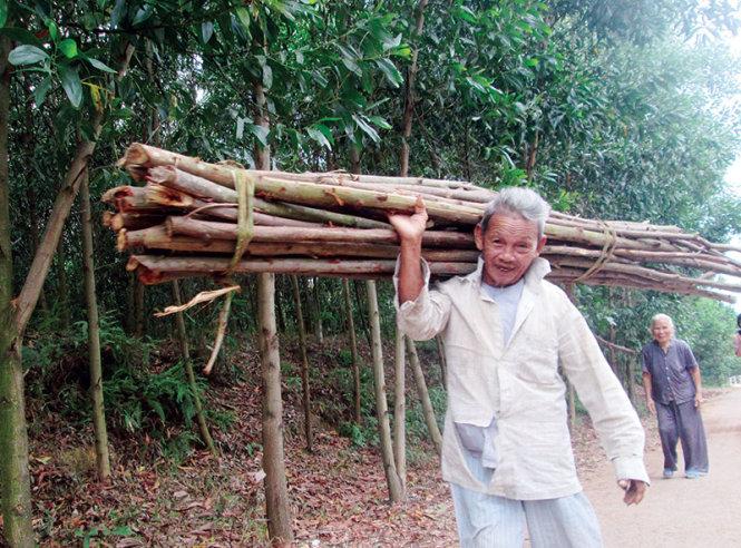 ong bua (92 tuoi) va vo (83 tuoi) o khu tai dinh cu ben van phai vao rung kiem cui ban hang ngay - anh: ba quoc