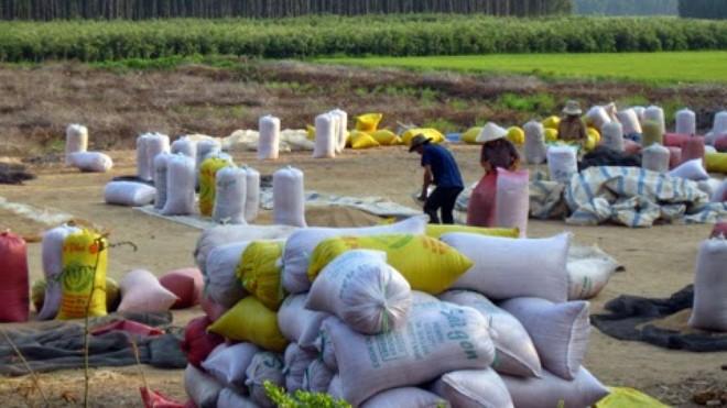 Có cơ sở để tin giá gạo sẽ tăng vào cuối năm