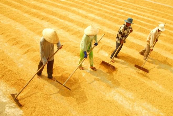 M&A – con đường ngắn nhất để trở thành công ty nông nghiệp tỷ đô