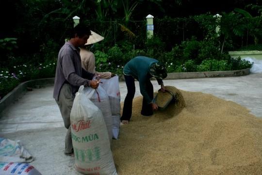 Jasmine sẽ là thương hiệu gạo Việt Nam