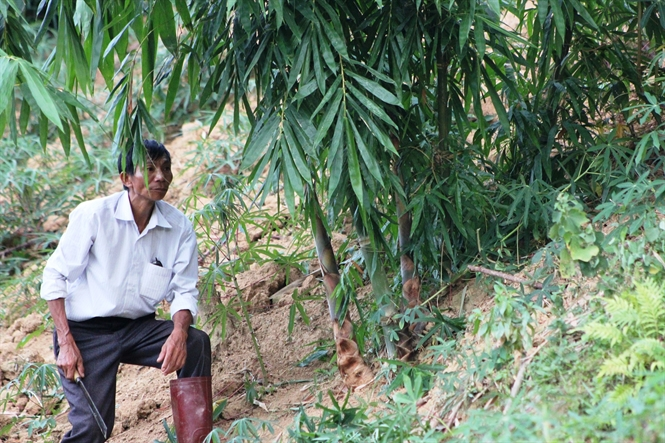 Thành triệu phú nhờ trồng măng bói