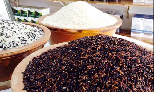 Cả trăm nghìn đồng một kg gạo dược liệu