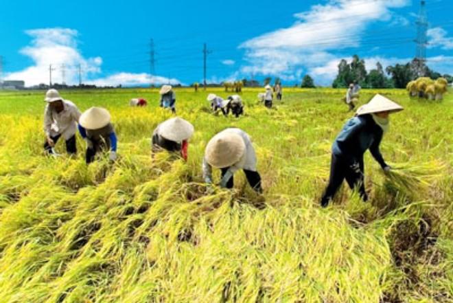 Nông nghiệp là lĩnh vực tổn thương nhất trong hội nhập