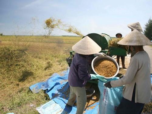 Giá trị gia tăng trong nông nghiệp 'giậm chân' một thập niên
