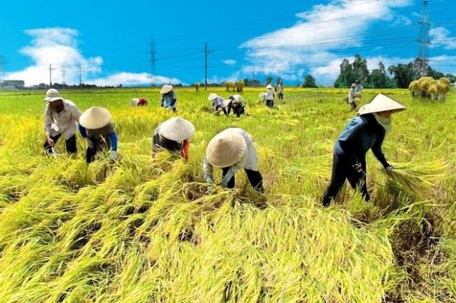 Nếu không cạnh tranh, nông nghiệp thất bại ngay sân nhà