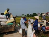 """Nông sản Việt lo chuyện hội nhập: Trụ vững """"ngôi vương"""" xuất khẩu gạo"""