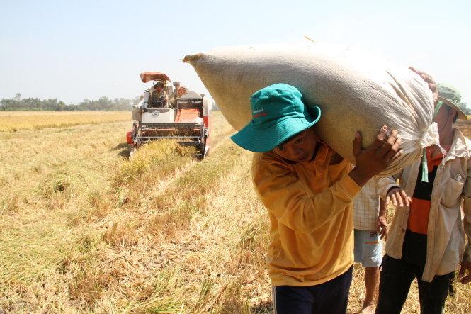 Thu nhập nông dân cực thấp, tụt hậu không còn là nguy cơ