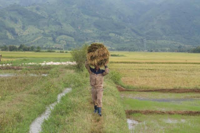 """TPP: Góc nhìn """"tỉnh táo"""" cho Việt Nam từ chuyên gia quốc tế"""