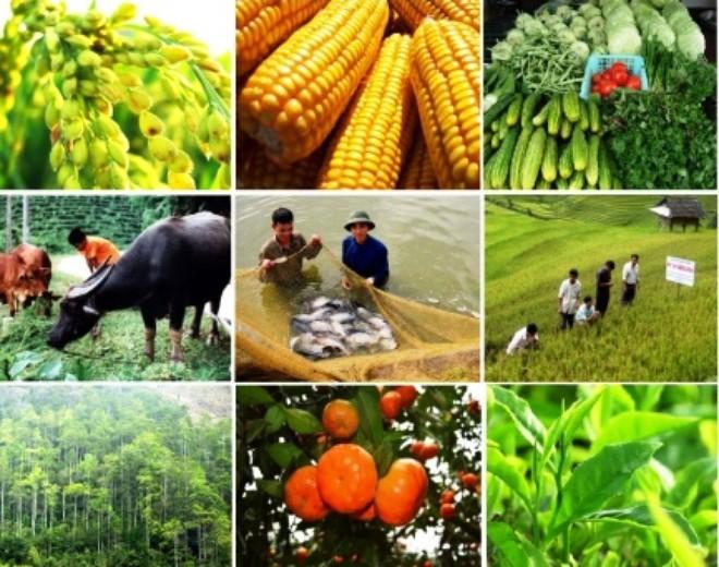 10 thành tựu nổi bật của ngành nông nghiệp giai đoạn 2010-2015