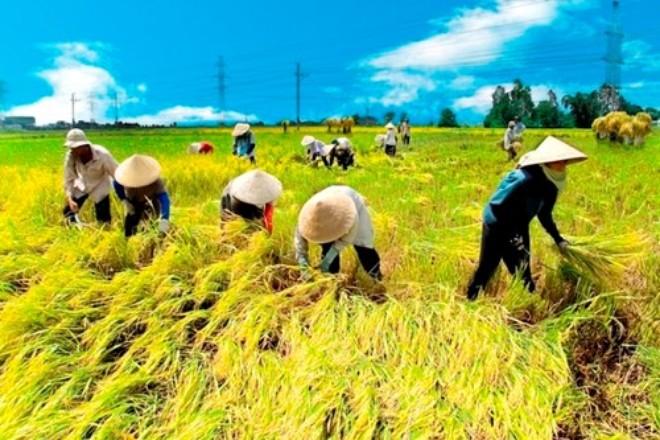 """Nông nghiệp trước TPP: """"Lo lắng là một chuyện, đầu tư mới quan trọng"""""""