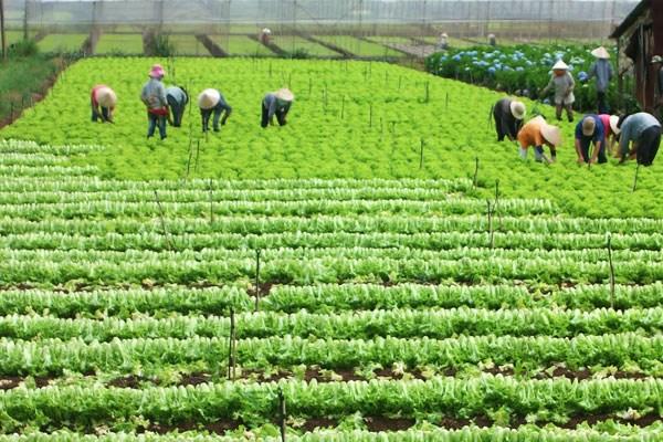 Đánh giá hiệu quả sử dụng đất của các nông, lâm trường giai đoạn 2004-2014