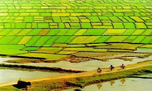 Làm gì để nông nghiệp và người nông dân tận dụng cơ hội phát triển