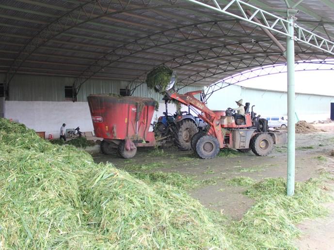 Chiến lược nội hóa bò ngoại: 'Đại gia' sẽ thay đổi nông nghiệp
