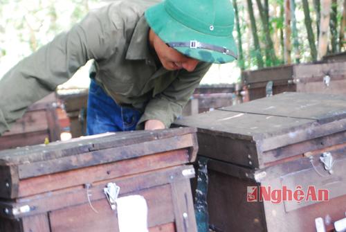 Nghề nuôi ong lấy mật ở Đồng Hợp