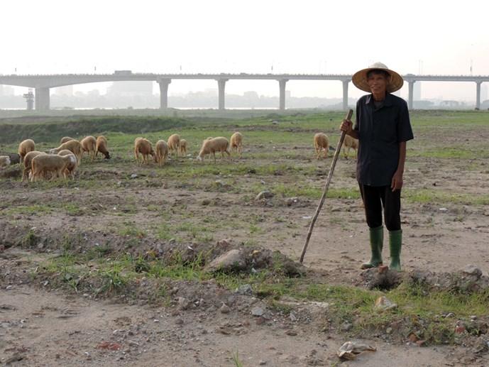 Thu nhập tiền tỉ từ nuôi cừu ở Thủ đô