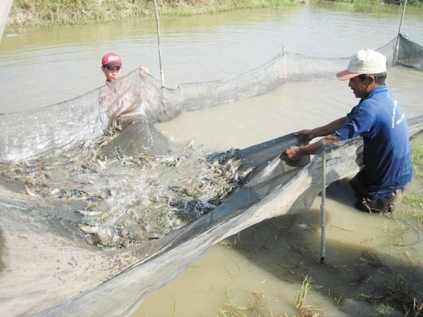 Nhiều mối lo từ nguyên liệu thủy sản nhập khẩu