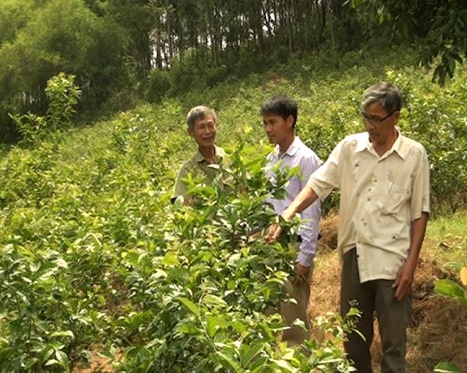 Thu nhập cao nhờ trồng cây xạ đen
