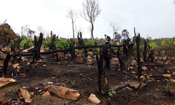 Khoét ruột rừng Phú Quốc: Rừng trống như sân banh