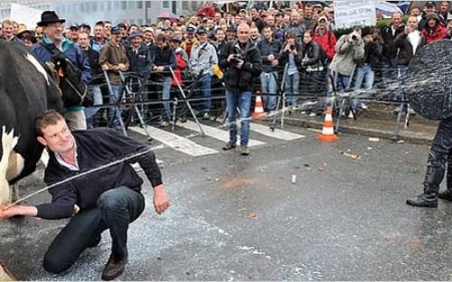 """Nông dân châu Âu bế tắc trong """"khủng hoảng sữa"""""""