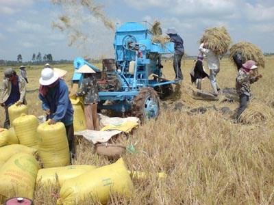 Bỏ thói quen sản xuất gạo kiểu tự cung tự cấp