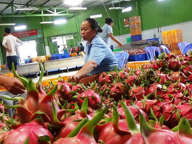 Xuất khẩu trái cây VN sẽ tăng vọt khi giảm cước, phí