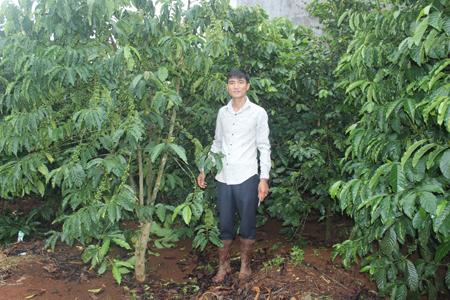 Thu 400 triệu đồng mỗi tháng từ sản xuất cà phê khép kín