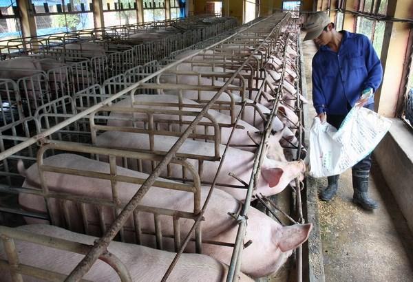 """Vào TPP, ngành chăn nuôi Việt Nam sẽ chịu """"đau đớn"""" nhất?"""