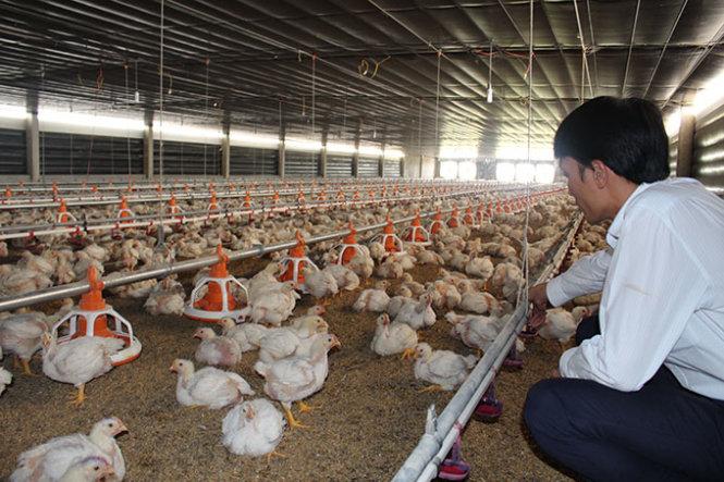Đừng bỏ mặc ngành chăn nuôi