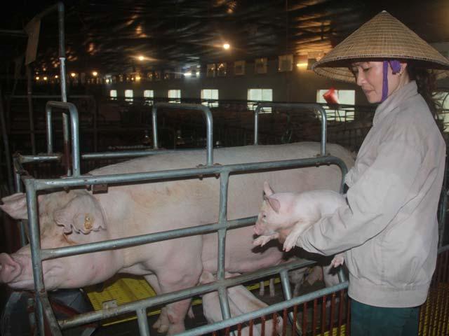 Hà Nội: 700 trang trại có thu nhập tiền tỷ