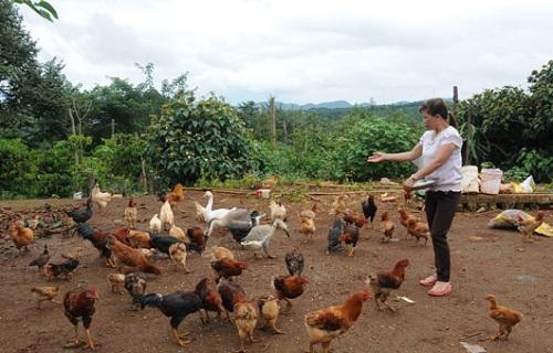 Nông dân thành tỷ phú nhờ kinh tế trang trại