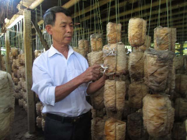 Trồng nấm, lãi 300 triệu đồng mỗi năm